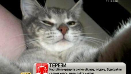 В сети набирают популярность фотографии котов, которые якобы сами себя фотографируют