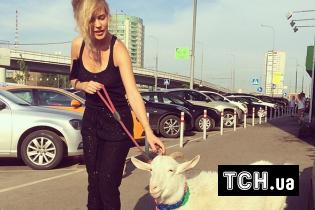 Кумедна Глюкоза вивела свою козу Машу на прогулянку