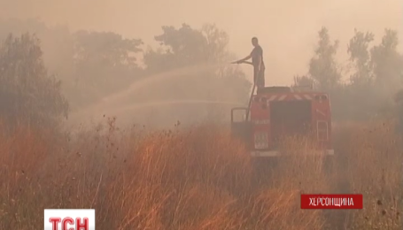 Около ста гектаров соснового леса выгорели на Херсонщине