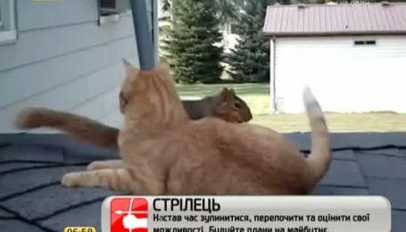 Дружба кота и белки тронула Интернет