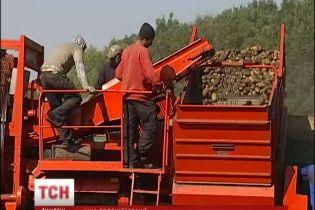 Українські городина та фрукти мають всі шанси витіснити в Європі турецьких конкурентів