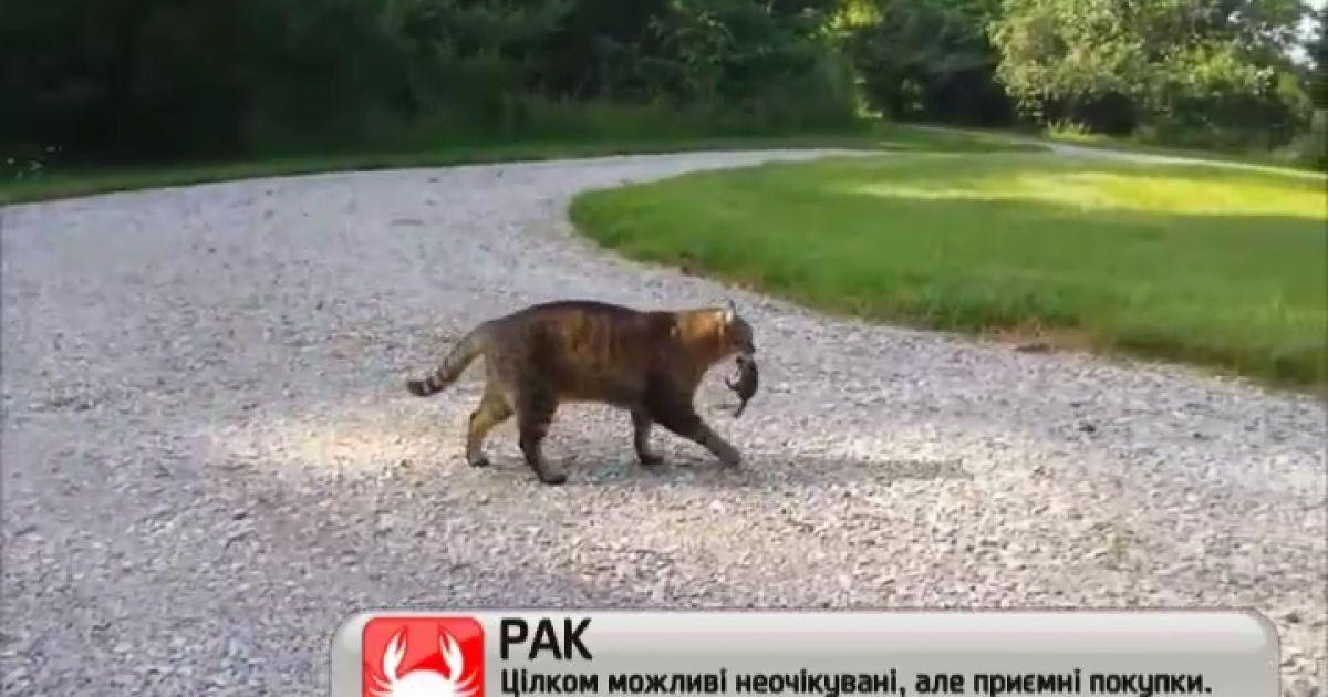 cats are weird video