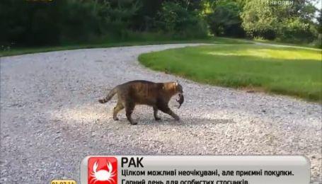 Мережу розчулив сміливий бурундук, який вступив в нерівний бій з котом