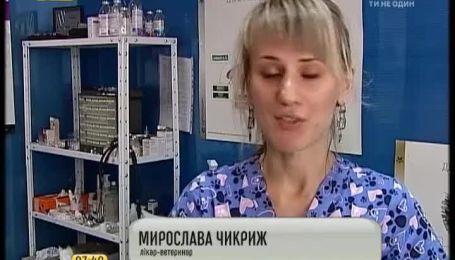В Киеве открылся первый детсад для животных
