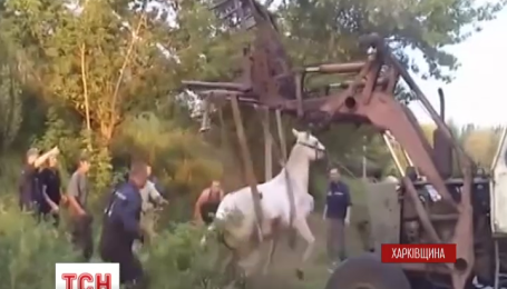 Харківські рятувальники витягли коня із каналізаційного колодязя
