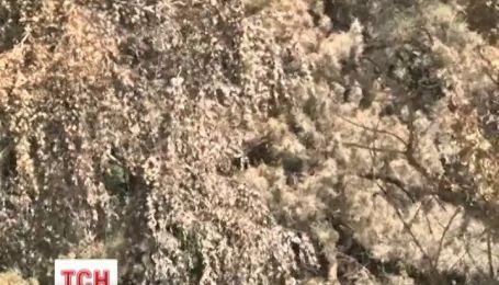 На Киевщине неизвестные слили 20 тонн экологически опасного неизвестного вещества