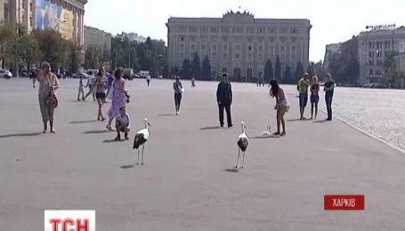 В Харькове на центральной площади гуляют аисты