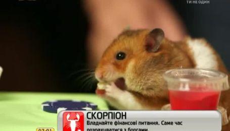 Чемпіон світу з поїдання хот-догів кинув виклик хом'яку