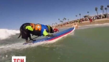 Четвероногие серферы соревновались в Калифорнии