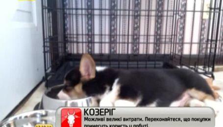 Фото спящих животных радуют Интернет-пользователей
