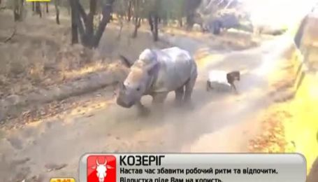 Дружба ягнятка і маленького носорога потішила Інтернет-користувачів