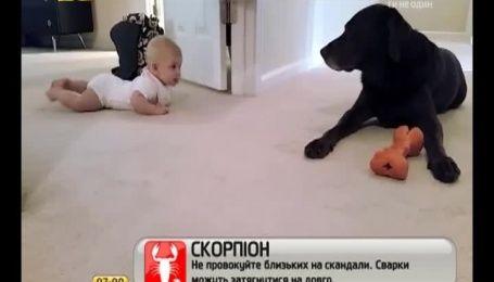 Мережу зворушив ролик про перше знайомство немовля і пса