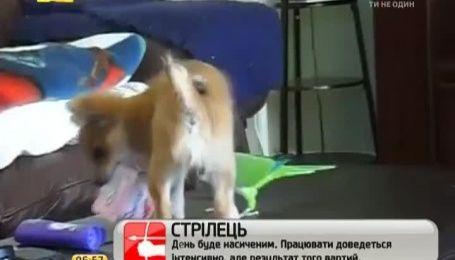 """Бійка"" пса і папуги за йогурт потішила Інтернет"