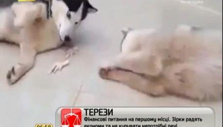 Мережу вразили пси, які діляться курячими лапками
