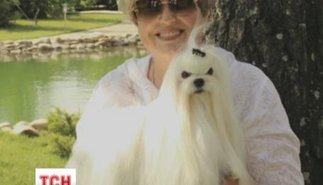 Жена министра-беглеца Захарченко продала свой собачий питомник