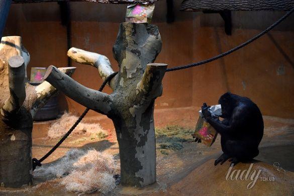 Ганноверский зоопарк_5