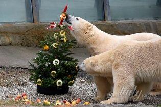 В мире животных: в Ганноверском зоопарке отмечают Новый год