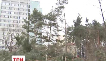 В Киеве вырубили 163 сосны, чтобы построить высотку