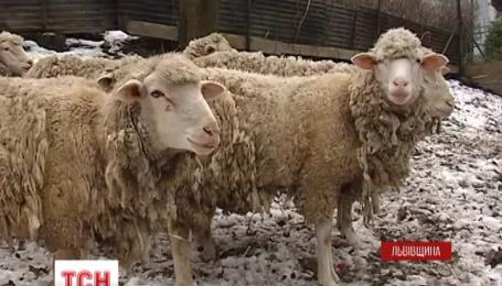 Понад півсотні екзотичних тварин знайшли мертвими у покинутій фермі на Львівщині