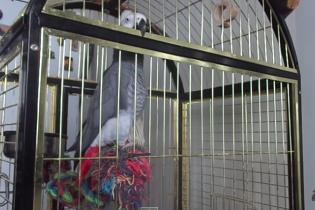 """Мережу підірвав папуга, який співає """"Путін — х*йло"""""""