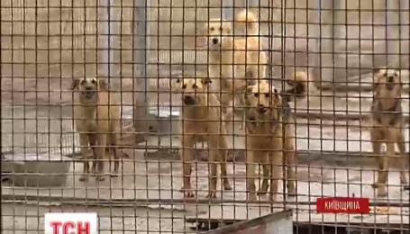 Волонтеры проинспектировали единственный на Киевщине коммунальный приют для животных
