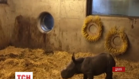 Маленький носоріг із Копенгагенського зоопарку став Інтернет-сенсацією