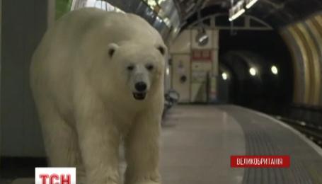 Полярный медведь перепугал жителей Лондона