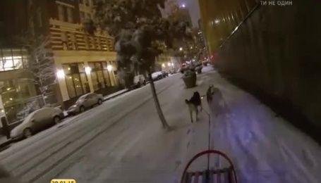 Американец воспользовался снежной погодой, чтобы покататься на упряжке с собаками