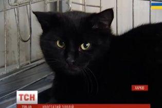 В Харькове на мясокомбинате кот погрыз колбасы и балыков на 6 тысяч гривен