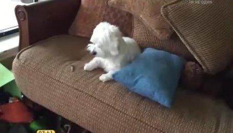 Реакция собак, которых поймали на месте преступления, порадовала Интернет
