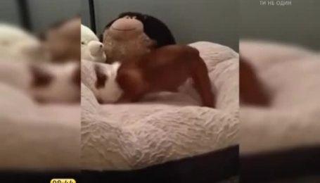 """Сеть """"взорвала"""" собачка, которая радовалась новой подушке"""