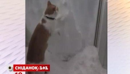 Відео двобою кота зі снігом переглянуло в мережі 2 мільйони користувачів