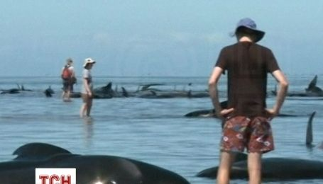 Майже 200 китів викинулися на берег в Новій Зеландії