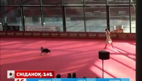 Выступление танцовщицы в паре с собакой поразил Сеть