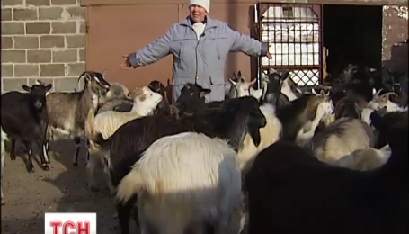 Що віщує рік рогатої та норовливої кози
