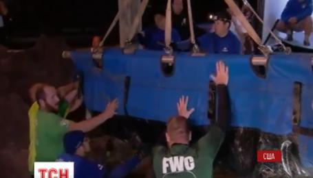 Девятнадцать ламантинов застряли в канализации во Флориде