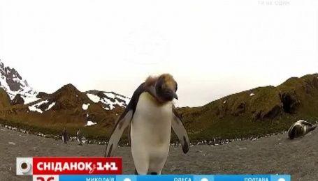 В Оксфордском университете появилась должность счетчика пингвинов