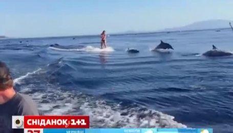 Ролик о вейкбординг в паре с дельфинами поразил Интернет-пользователей