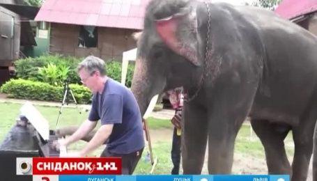 Слон - меломан поразил Интернет-пользователей своим чувством ритма