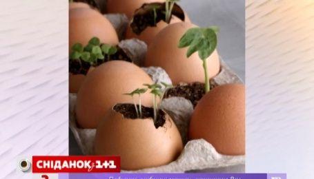 Для экономии украинки начали выращивать зелень на подоконниках