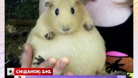 Фото вагітних тваринок підірвало Мережу
