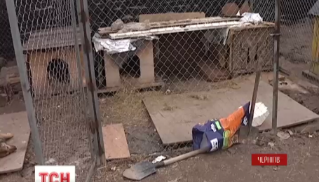 Під Черніговом невідомі отруїли собак, яких волонтери тримали у вольєрах після стерилізації