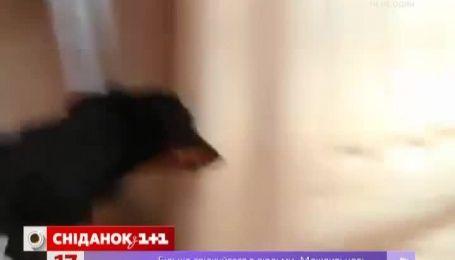 Хозяин сделал из своих собак звезд, снимая их в короткометражных триллерах