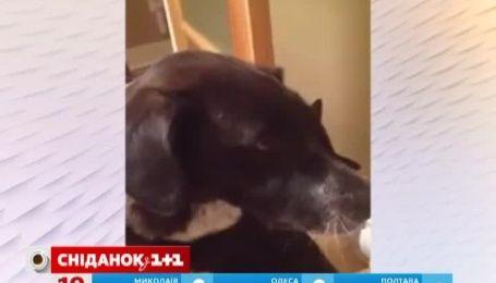Інтернет-користувачі милуються котом, який обіймає пса після 10-денної розлуки