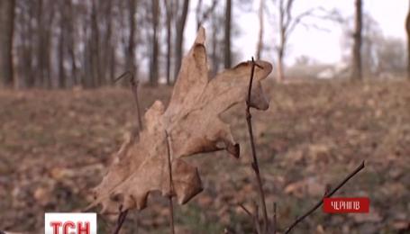 У семей, погибших в АТО украинских воинов, пытаются отсудить землю