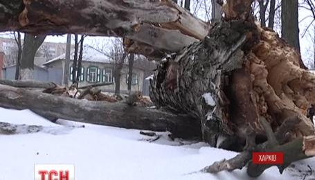 Через потужні буревії знеструмленими залишаються 176 населених пункти у шести областях України