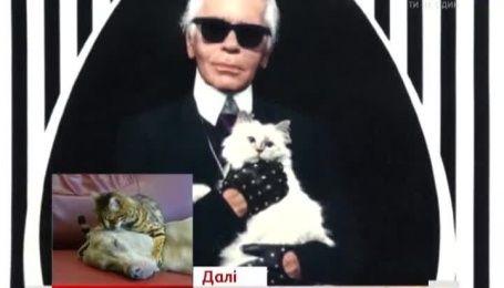 Кошка Карла Лагерфельда приносит ему дополнительные миллионные прибыли