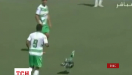 Матч туніського Чемпіонату з футболу ледве не зірвала індичка