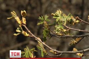 Тиждень в Україні розпочнеться з теплої і сухої погоди