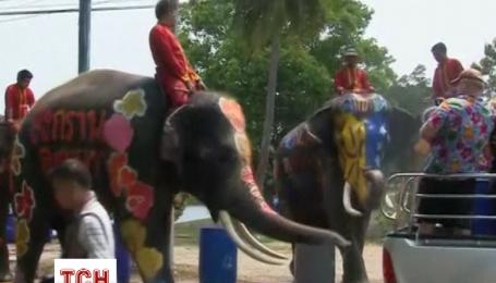 На Новый год в Таиланде обливаются водой и катаются на разрисованных слонах